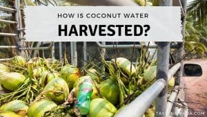 Blog Cover Image - How is coconut water harvested
