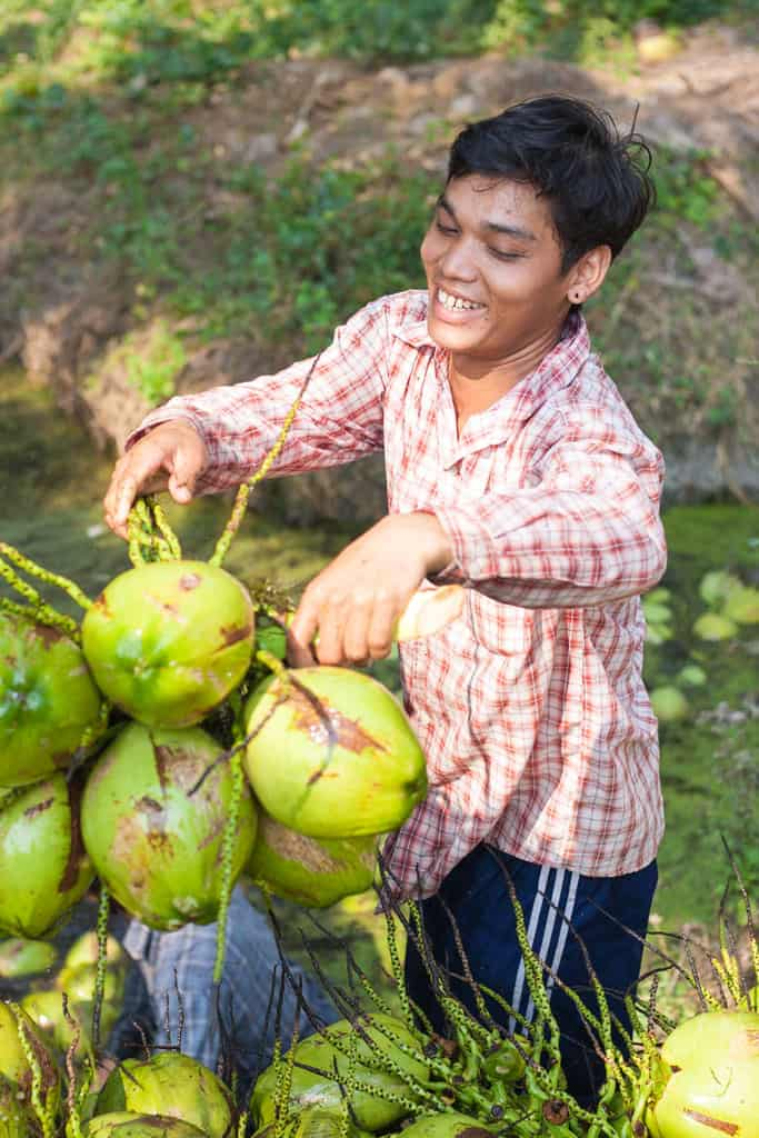 Image of selecting young coconut