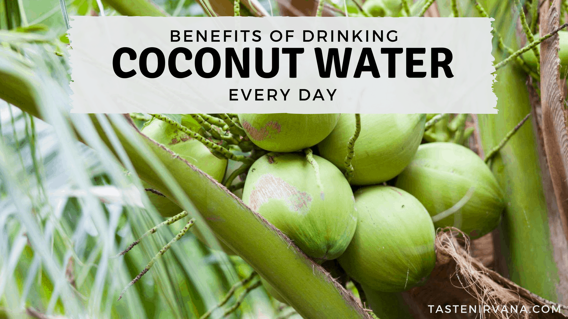 benefits of drinking coconut water daily - taste nirvana