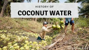 Blog Cover Image - History Of Coconut Water